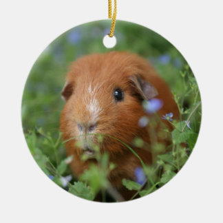 Cute cuddly ginger guinea pig outside on grass ceramic ornament