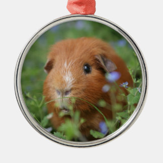 Cute cuddly ginger guinea pig outside on grass metal ornament
