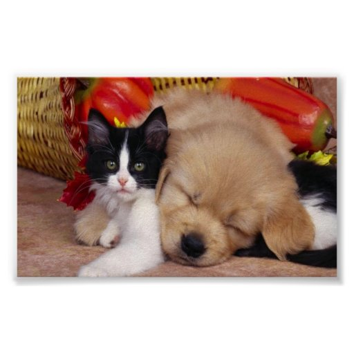 Cute cuddly pets posters