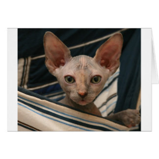 Cute curios sphynx kitten greeting card
