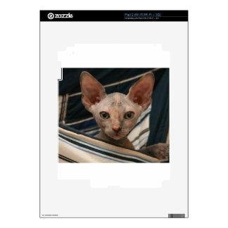 Cute curios sphynx kitten decal for the iPad 2