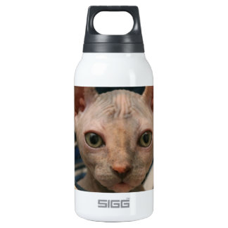 Cute curios sphynx kitten insulated water bottle