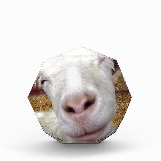 cute curious baby goat acrylic award