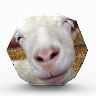 cute curious baby goat award