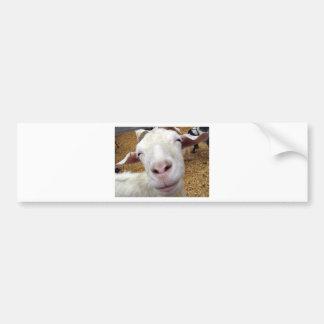 cute curious baby goat bumper sticker