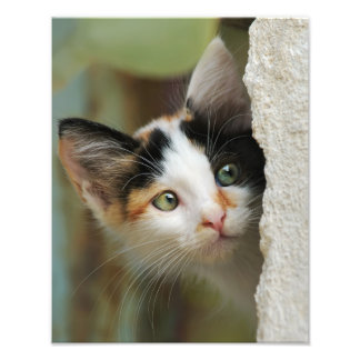 Cute Curious Cat Kitten Prying Eyes - Paperprint Photo Print