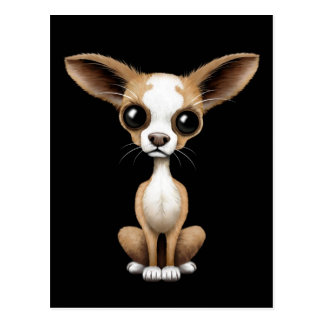 Cute Curious Chihuahua with Large Ears on Black Postcard