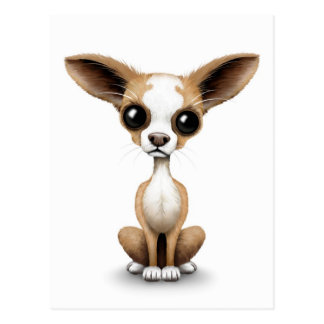 Cute Curious Chihuahua with Large Ears on White Postcard