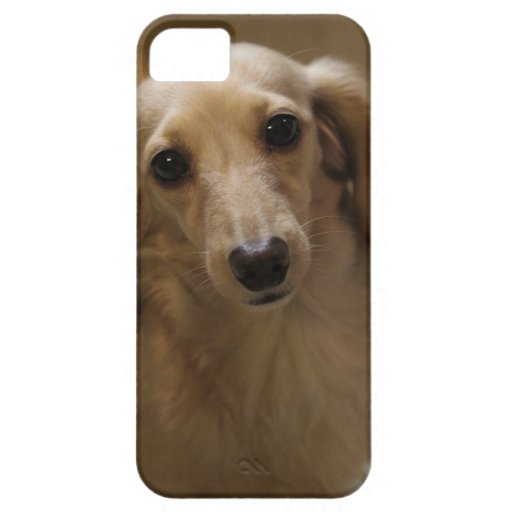Cute dachschund dog iPhone 5/5S cases
