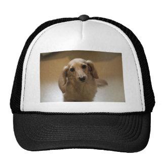 Cute dachschund dog hat
