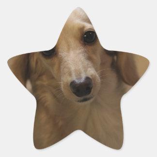 Cute dachschund dog star sticker