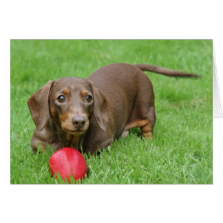 Cute dachshund blank greeting card