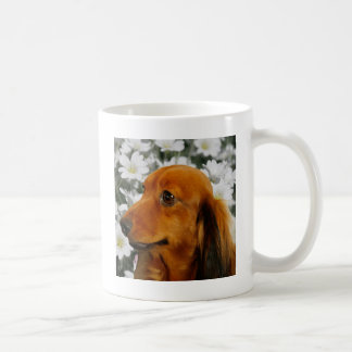 Cute Dachshund (Brown Long Haired) in Flowers Coffee Mug