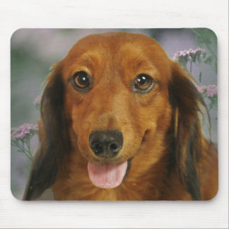 Cute Dachshund (Brown Long Haired) Wild Flowers Mouse Pad