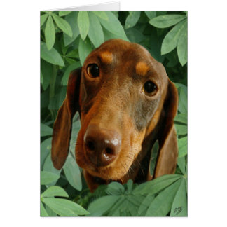 Cute Dachshund (Brown Short Haired) Green Leaves Card