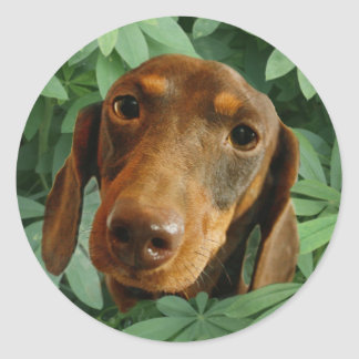 Cute Dachshund (Brown Short Haired) Green Leaves Classic Round Sticker