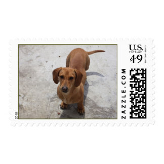 Cute Dachshund Collection Postage