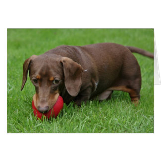cute dachshund fetching blank greeting card