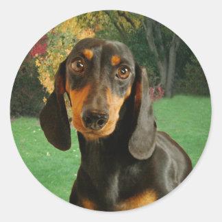 Cute Dachshund (Miniature Brown Short Haired) Classic Round Sticker