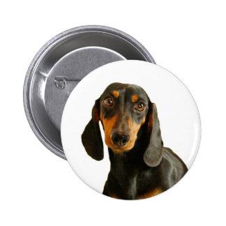 Cute Dachshund ( Miniature Brown Short Haired ) Pinback Button