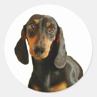 Cute Dachshund ( Miniature Brown Short Haired ) Classic Round Sticker