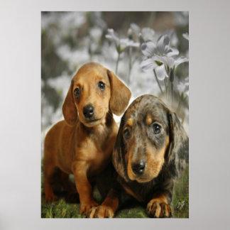 Cute Dachshund Puppies (Brown/Black) Poster