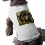 Cute Dachshund  Puppy (Black/Grey) on the Lake Pet Clothing