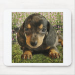 Cute Dachshund  Puppy (Black/Grey) on the Lake Mouse Pad