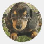 Cute Dachshund  Puppy (Black/Grey) on the Lake Classic Round Sticker