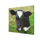 Cute Dairy Cow Calf Canvas Print