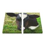 Cute Dairy Cow Calf Canvas Prints
