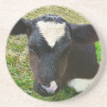Cute Dairy Cow Calf Coasters