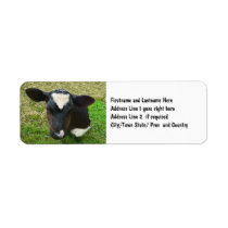 Cute Dairy Cow Calf Label