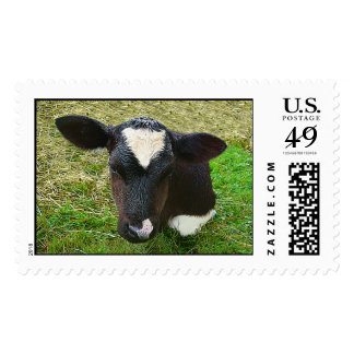 Cute Dairy Cow Calf Stamps