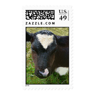 Cute Dairy Cow Calf Postage Stamps