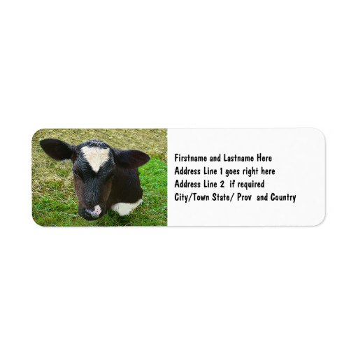 Cute Dairy Cow Calf Return Address Labels