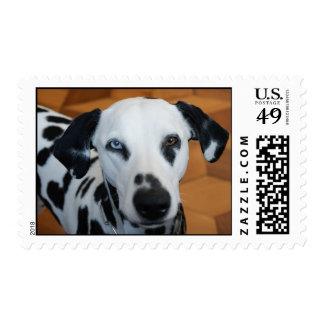 Cute Dalmatian Postage Stamp