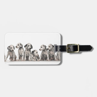cute dalmation puppies pupy pup pups dog dogs tag for bags