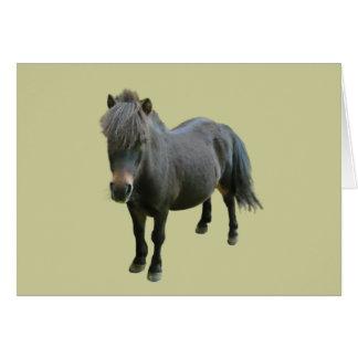 Cute Dartmoor Pony Greeting Card