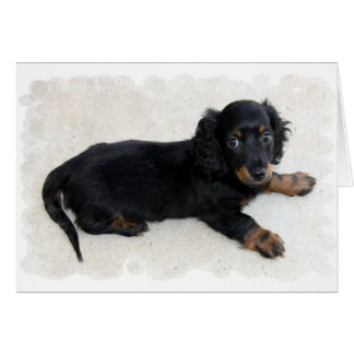 Cute Daschund Greeting Card
