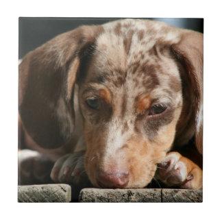 Cute Daschund Puppy Tile