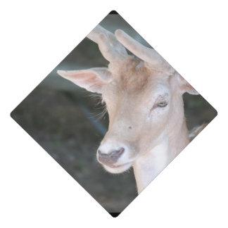 Cute Deer Graduation Cap Topper