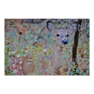 Cute Deer in a Forest Poster