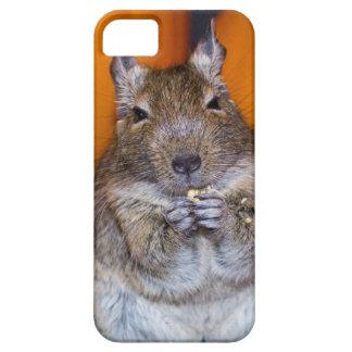 Cute Degu Eating iPhone SE/5/5s Case