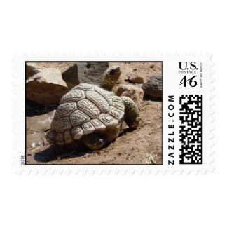 Cute Desert Tortoise American Southwest Postage Stamp
