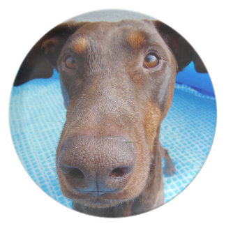Cute doberman nose close-up party plates