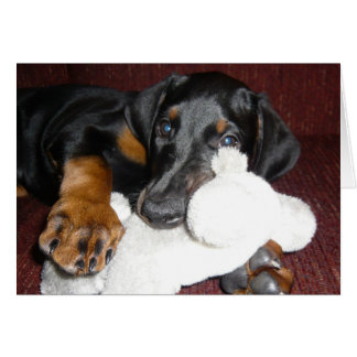 Cute Doberman Pinscher Puppy - Blank Note Card