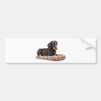 cute doberman pinscher puppy car bumper sticker