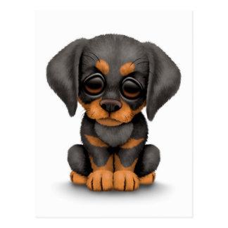 Cute Doberman Pinscher Puppy Dog on White Postcard