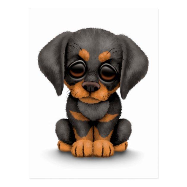 Cute Doberman Pinscher Puppy Dog On White Postcard Zazzle Com